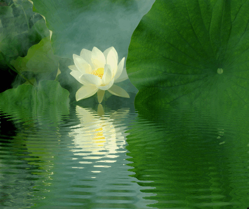 lotus-flower-reflections-green1